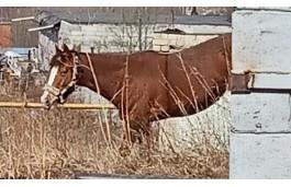 В Златоусте бродячий конь напал на женщину