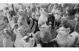 В заброшенной челябинской квартире погибли 20 кошек