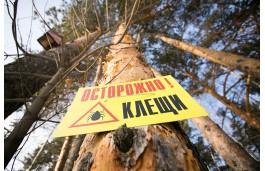 В Челябинской области запретили брать в турпоходы детей, не привитых от клеща