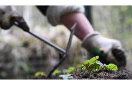 Дачникам грозит штраф за сорняки на участке