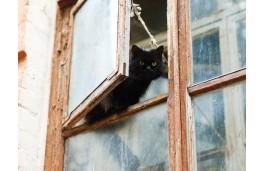 В Златоусте уголовник залез в дом через форточку и украл телефон
